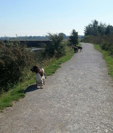 Riverside Country Park: The river walk and cycle path