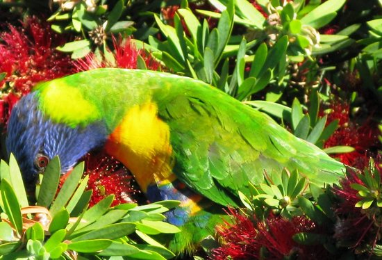 Dolphin Shores Hotel: The parrots are never far away