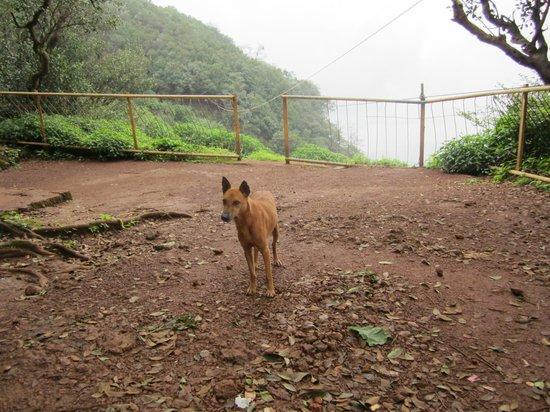 Radha Cottage: Native / stroll companion