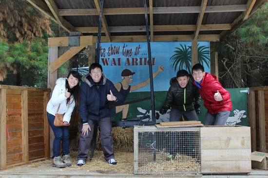 Wai ariki Farm Park, Cafe & Gallery: It's our stage!