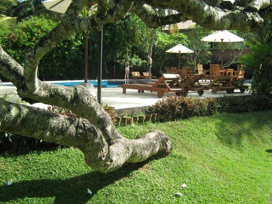 Hotel Hibiscus Beach: басейн