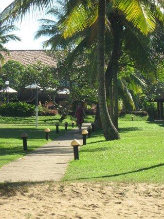 Hotel Hibiscus Beach: от пляжа взгяд к басейну