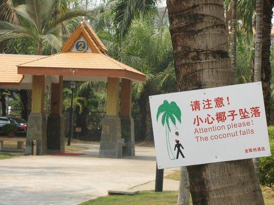 Golden Banna: attention aux chutes de noix de coco !