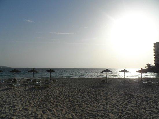 AluaSun Torrenova: Palmanova beach at sunset