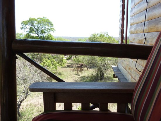 Pezulu Tree House Game Lodge : giraffa dal balcone della camera