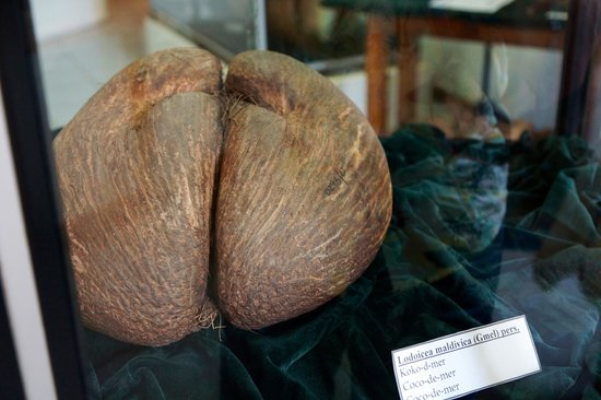 Seychelles Natural History Museum: Seychelles National Museum