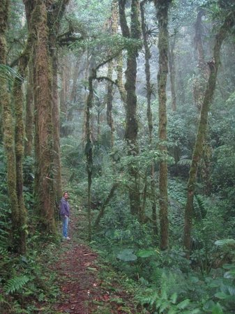 EcoTreat: High in the virgin cloud forest of Panama