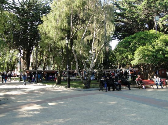 Plaza Munoz Gamero: Conifers and local patrons in the plaza
