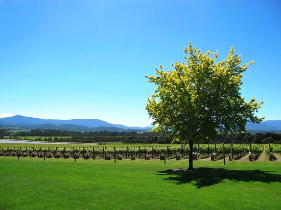 Domaine Chandon: View from the Bar