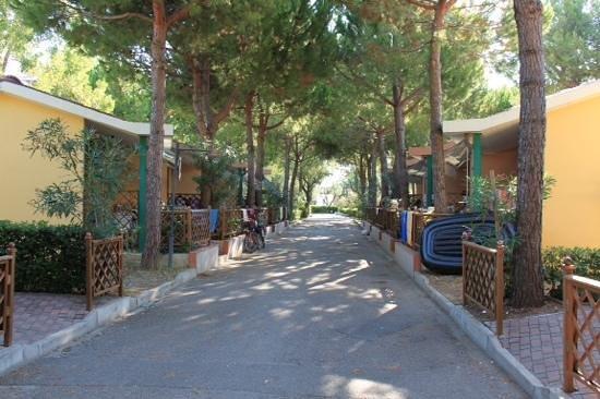 Salinello Camping Village: Una delle vie del villaggio