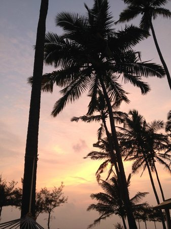 Varkala SeaShore Beach Resort: Palm trees