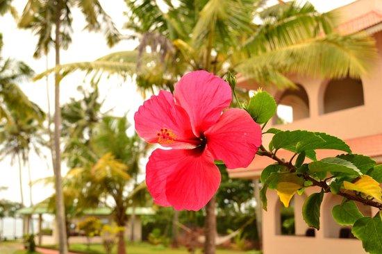 Varkala SeaShore Beach Resort: Flowers in the garden