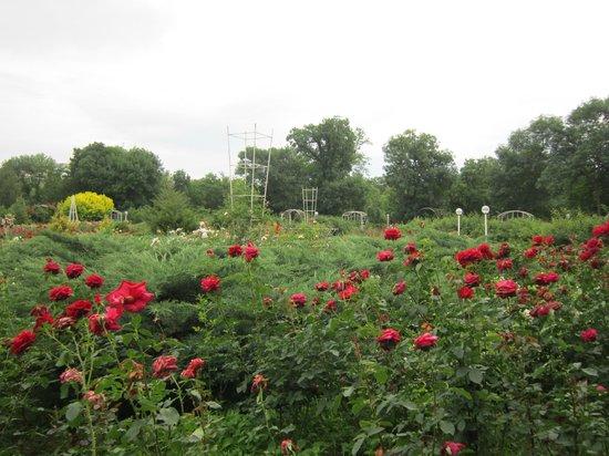 Salgirka City Park: Вид на розарий.