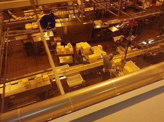 Tillamook Cheese Factory: Cheese on the conveyor belt