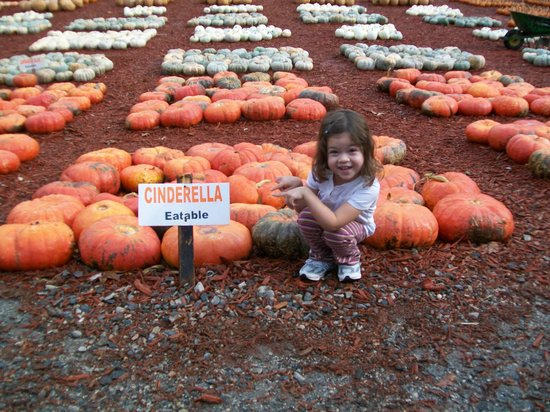 Amicalola Falls Lodge : pumpkin patch near by ok bit pricey...FYI