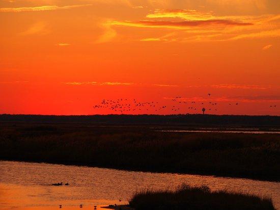Edwin B. Forsythe National Wildlife Refuge: A flock of birds under setting sun