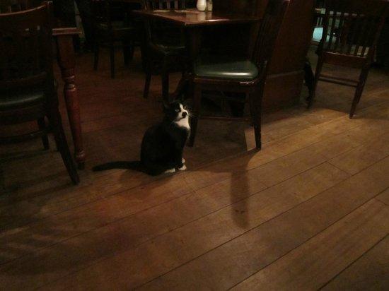 Hotel Old Quarter: Кот в ресторане