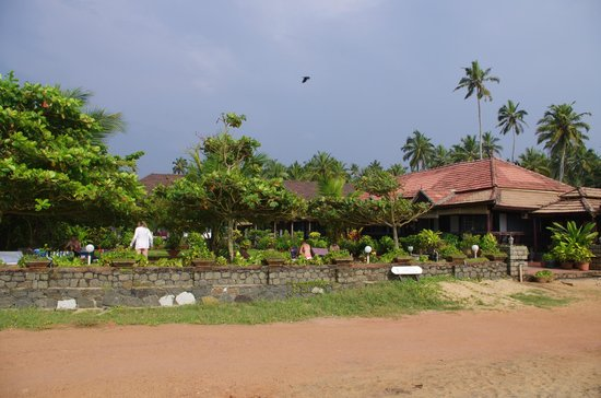 Palm Tree Heritage: vu de la plage