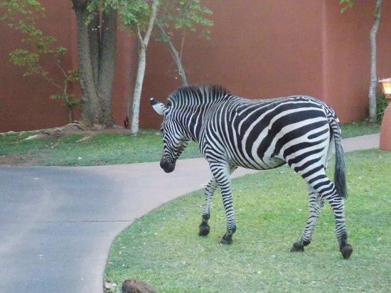 AVANI Victoria Falls Resort: Amanecer entre animales hermosos