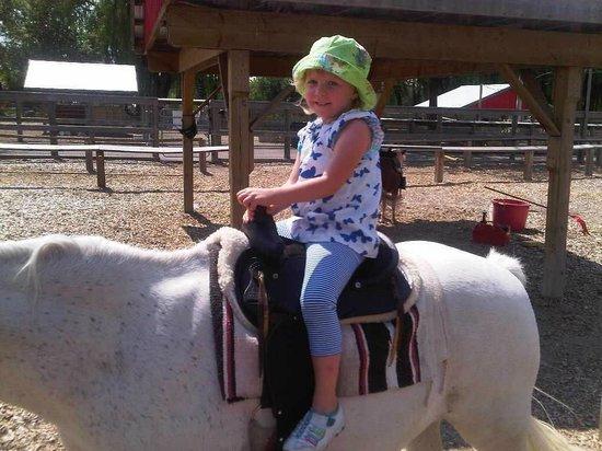 Pony rides & nice petting zoo
