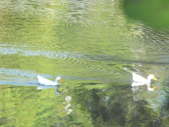 Myrtle Beach KOA Kampground : pond