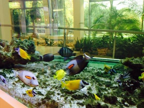 Favorite Parkhotel: Aquarium