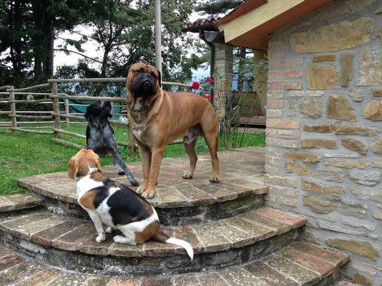 Casale Mariandre: I cani di casa