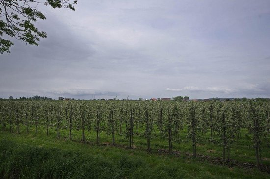 Jork, Germany: Macieiras