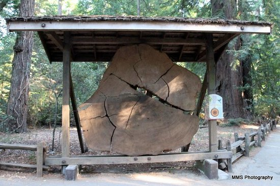 Henry Cowell Redwoods State Park: Redwood section