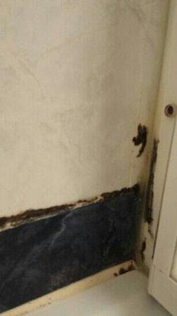 Green Park Hotel Pamphili : Paredes baño