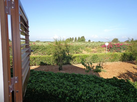 Borgo Pida: View from room 8, olive trees and vineyards.