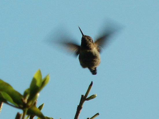 Cobbler's Walk Mendocino: Glendeven Hummingbird