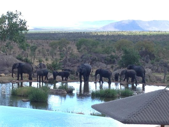 Four Seasons Safari Lodge Serengeti: Our view from the deck as we had lunch.