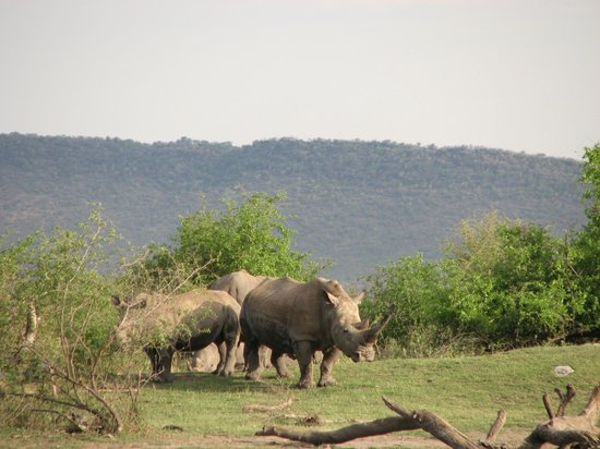 Mosetlha Bush Camp & Eco Lodge : Rhino
