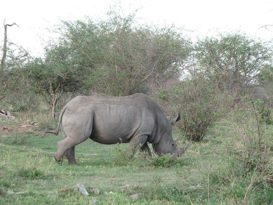 Mosetlha Bush Camp & Eco Lodge: Rhino