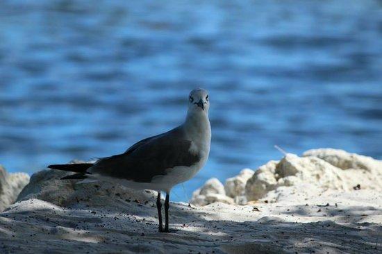 Ibis Bay Beach Resort : Naturaleza
