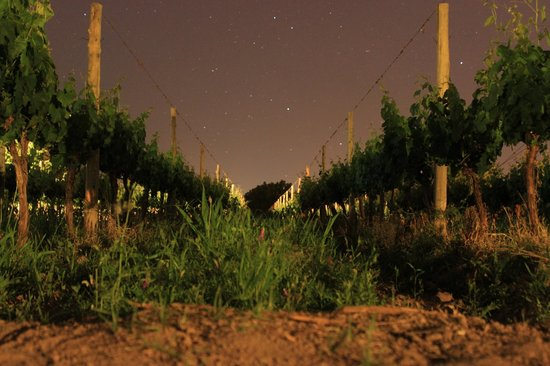 Posada Cavieres Wine Farm: foto nocturna
