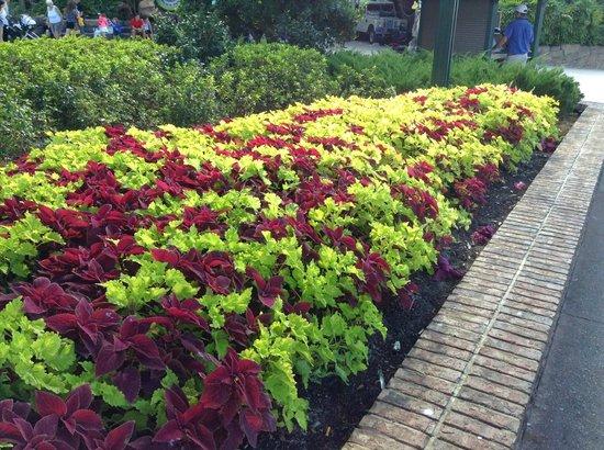 Disney Springs: Jardins