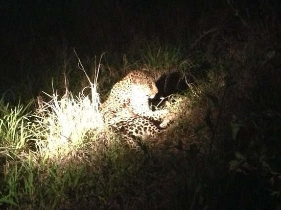 Idube Game Reserve Lodge: Our first leopard sighting