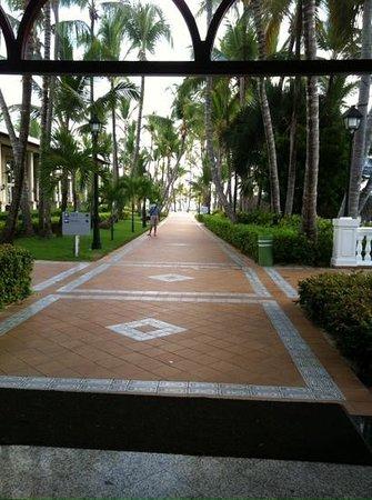 ClubHotel Riu Bambu: hotel