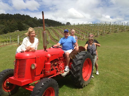 Tour Zealand Tours: in the vineyard after wine sampling