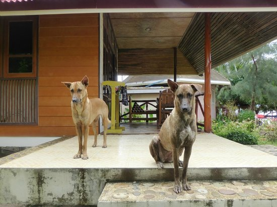 Bow Thong Resort: our resident beach dogs 'Dogface2' and 'Dogface'