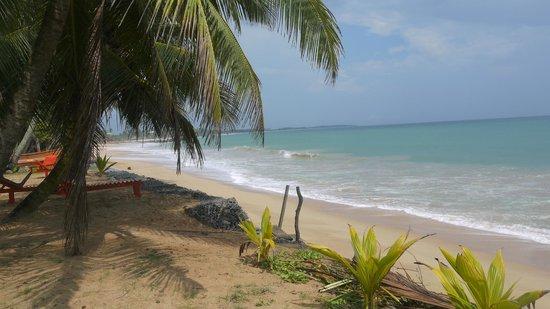 Tangalle, Sri Lanka: Kingfisher Guesthouse Front- Goyambokka Beach
