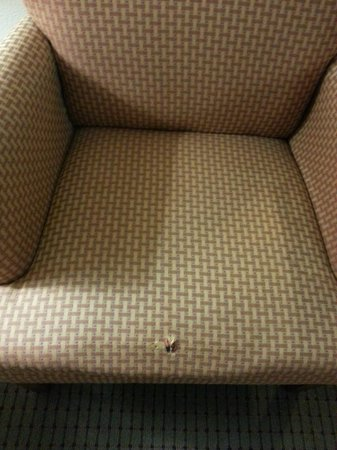 Comfort Suites Coralville : Chair in seating area