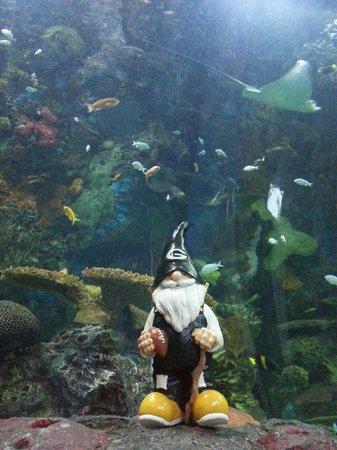 Good Thing It Was Dead Picture Of Virginia Aquarium