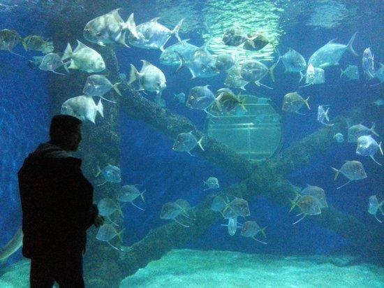 Under The Sea Picture Of Virginia Aquarium Marine