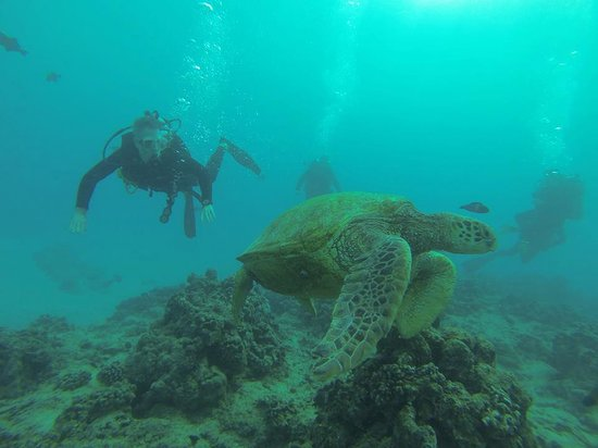 Rainbow Scuba Hawaii: Big Turtles on FIRST Dive