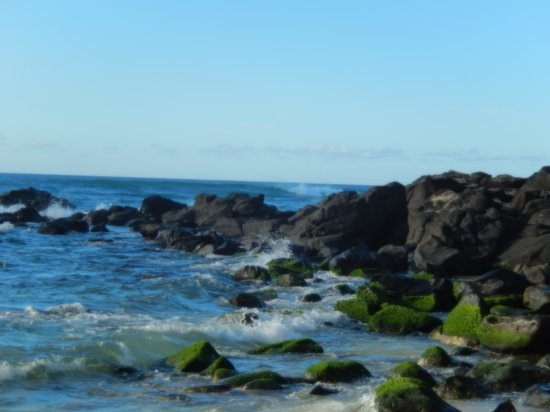 Aqua Pacific Monarch: North Shore