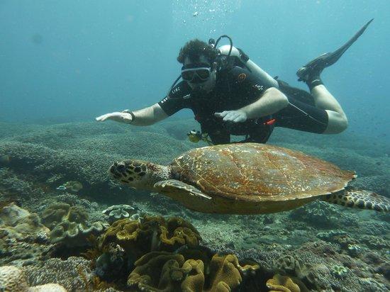Adventure Scuba Diving Bali: Me and Turtle