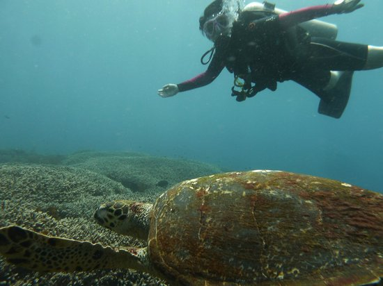 Adventure Scuba Diving Bali: Laurie and Turtle
